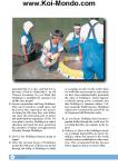 41089255 nishikigoi by koi mondo page 161 106x150 Cuplikan Buku Nishikigoi Mondo